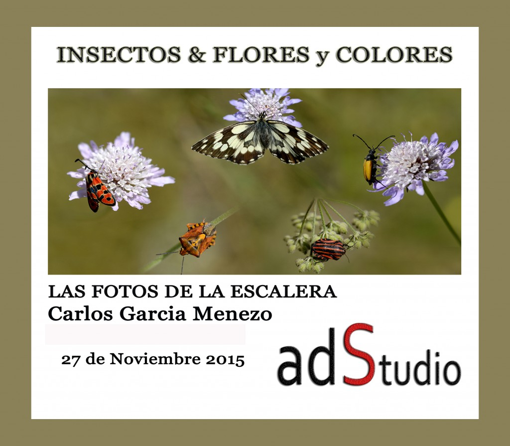 1-1-Insectos del Pirineo 1